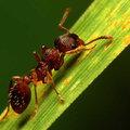Ameisen bekämpfen oder ausrotten auf verschiedene Weisen