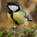 Die verschiedenen Arten Vögel, die sich im Winter im Garten aufhalten