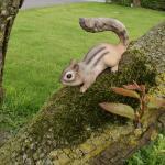 Eichhörnchen unterwegs
