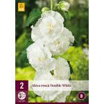 Alcea rosea 'Double White' (2 stück)