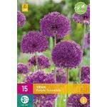 Allium Purple Sensation - 15 Stück (15 stück)