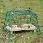 Schutzkäfig für kleine Gartenvögel