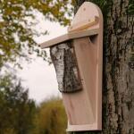 Nistkasten für Baumläufer
