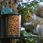 Futterhaus aus Metall für Eichhörnchen