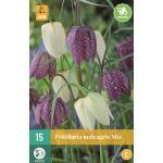 Fritillaria meleagris mix - Kiebitzeier