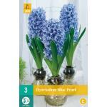 Hyacint Blue Pearl - Innenanbau (3 stück)