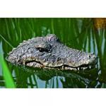Krokodil treibend