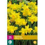 Narcissus Tête-à-Tête - Botanische Narzisse