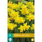 Narcissus Tête-à-Tête - Botanische Narzisse (5 stück)