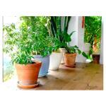 Blumenerde Zimmerpflanzen und Palmen 10 Liter