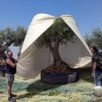 Riesenhülle für frostempfindliche Pflanzen 2,5 x 3,6 m