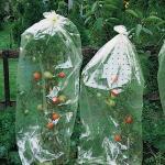 Tomatenhüllen 10 m x 0,65 m