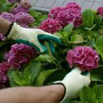 Gartenhandschuh Größe 9