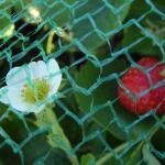 Gartennetz feinmaschig 8 x 8 m