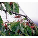 Gartennetz grobmaschig 2 m x 10 m