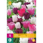 Tulipa Pastel mix