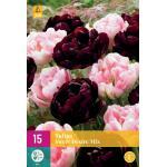 Tulipa Sweet Desire mix - doppelte späte Tulpe