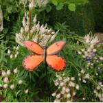 Schmetterling orange auf verschnörkeltem Bodenstecker