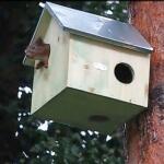 Häuschen für Eichhörnchen